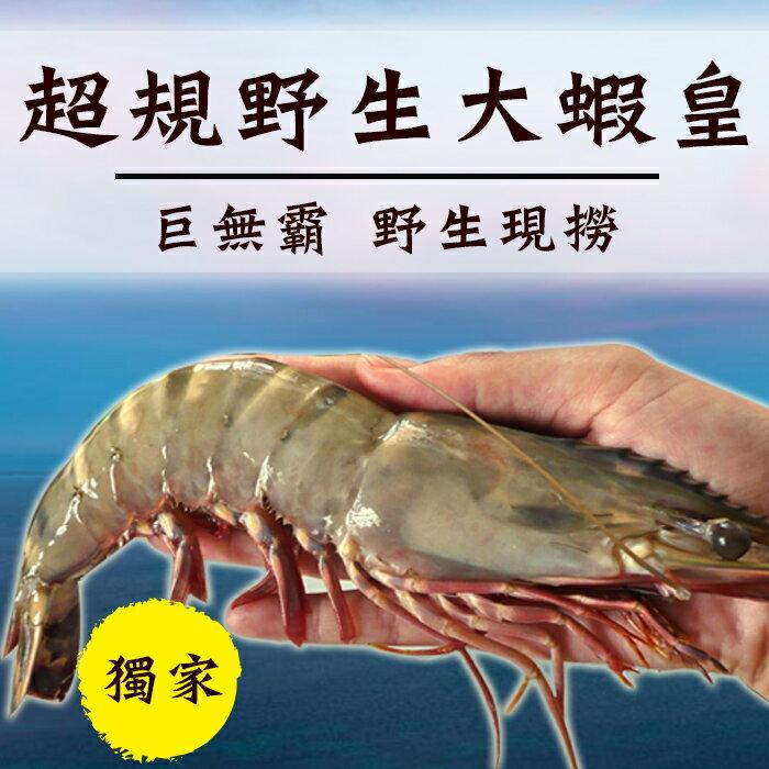 ☆超規巨無霸野生大蝦皇☆4尾裝草蝦