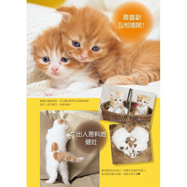 新手養貓必備書  暢銷版 3