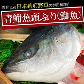 ~築地一番鮮~ 極鮮青魽魚頭 350g~400g  顆