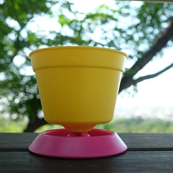 迷你小花盆,附水盆,色彩豐富,最適合桌上、室內、辦公桌舒壓、窗台、陽台