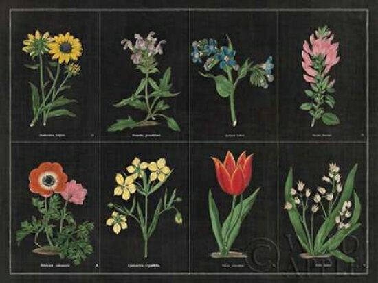 Botanical on Black Chart I Poster Print by Wild Apple Portfolio (11 x 14) 0