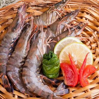 特級大草蝦
