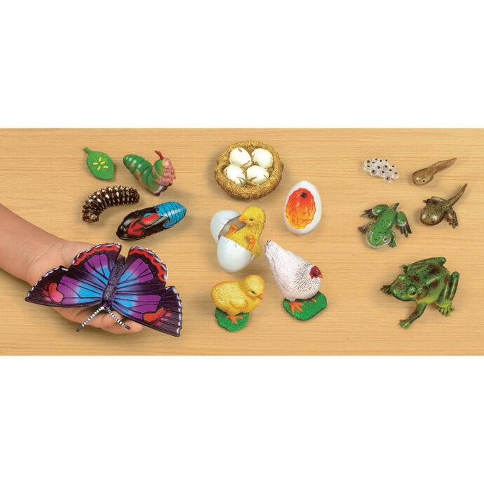 ~華森葳兒童教玩具~科學教具系列~動物生命模型 N8~GR700