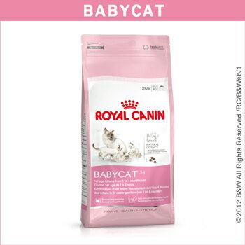 *Mi Gu*法國皇家Royal《BC34》400g離乳貓