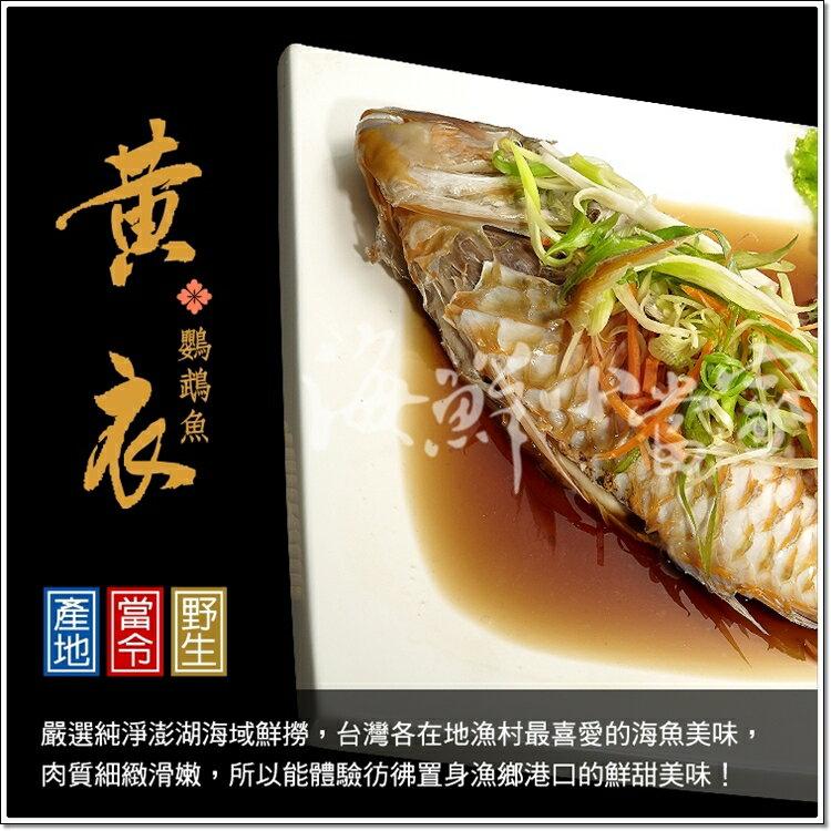 鸚哥魚清肉 純淨澎湖海域捕撈 肉質細緻滑嫩 魚皮富含濃厚膠質 絕對老饕首選!!