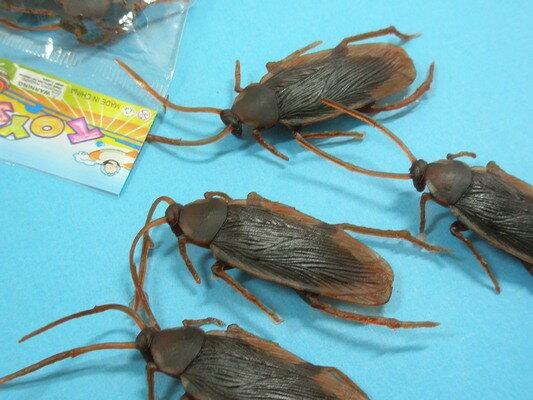 假蟑螂 假小強 仿真蟑螂 整人蟑螂玩具/{促10}一袋12包入(一包4隻入)共48隻