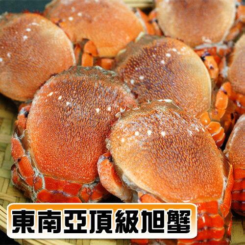 【築地一番鮮】野生母旭蟹13-17隻(2kg家庭豪華聚餐)免運組