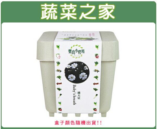 【蔬菜之家004-D08】iPlant小農場系列-滿天星