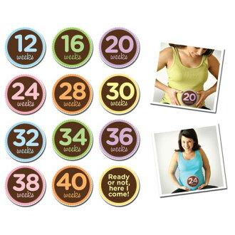 ★衛立兒生活館★美國Sticky Bellies 寶寶月份貼紙(孕媽咪12-40W)