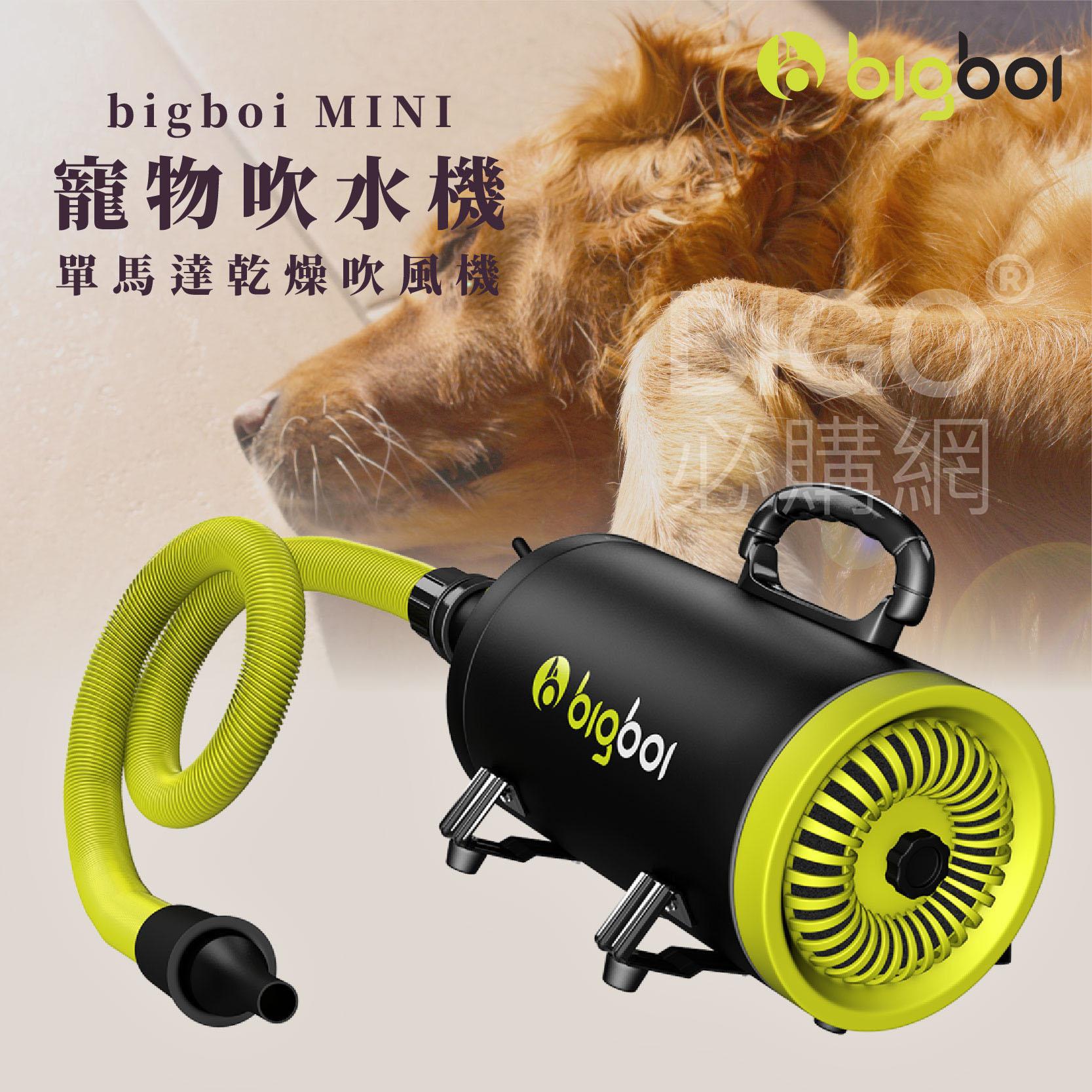 熱銷【bigboi】MINI 寵物單馬達吹風機 吹水機 低噪音 吹風機 乾燥 烘乾 洗澡 清潔 美容 貓狗必備
