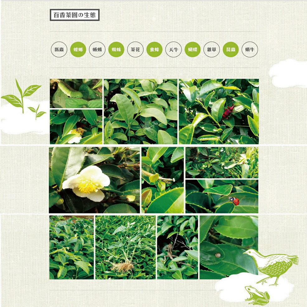 【百香】珍藏綠茶100g 2鐵罐組 百香茶葉 5