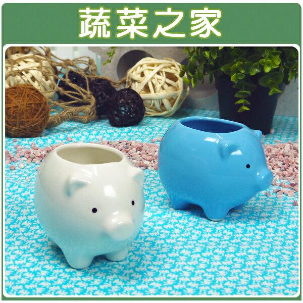 ~蔬菜之家004~G11WI~福氣小豬陶瓷 花盆~白色 ~  好康折扣