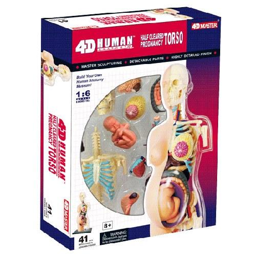 東喬精品百貨商城:《4DPUZZLE》人體器官-全透視半身-懷孕