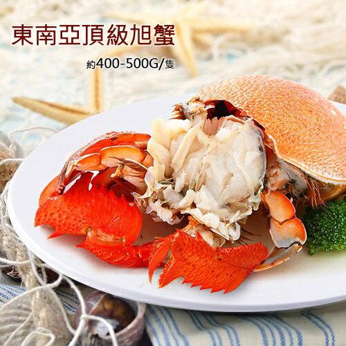 築地一番鮮:【築地一番鮮】嚴選-特大母旭蟹3隻(400-500g隻)免運費