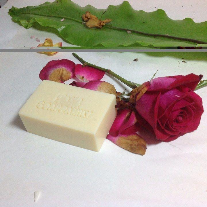 苦茶洗髮皂H1 (適用洗髮及全身沐浴)