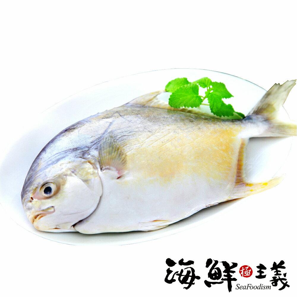 【海鮮主義】金鯧魚 700~800g★讓你一整年的旺來鯧~★金鯧魚口感介於白鯧和黑鯧之間,肉質非常適合拿來做清蒸,蒸好後加些配料,讓整體口感及顏色更豐富,家常菜也可煮出五星級的口感喔!! #年菜