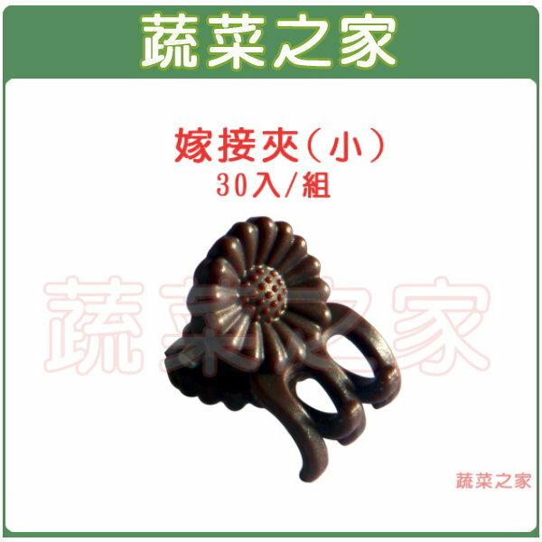 【蔬菜之家009-C55】嫁接夾(固定夾.蘭花夾)-(小)30入/組
