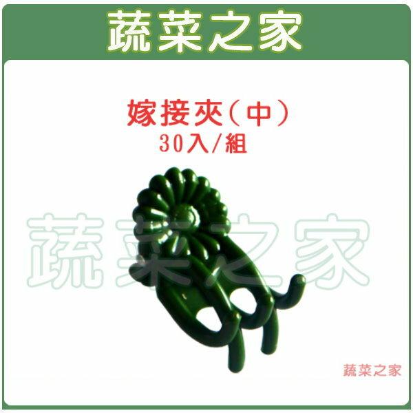 【蔬菜之家009-C57】嫁接夾(固定夾.蘭花夾)-(中)30入/組