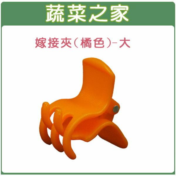 【蔬菜之家009-C60】橘色嫁接夾(蘭花夾.固定夾)-(大)500入/包