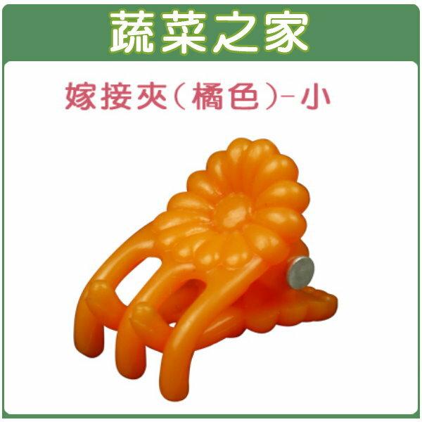 【蔬菜之家009-C61】橘色嫁接夾(蘭花夾.固定夾)-(小)30入/組