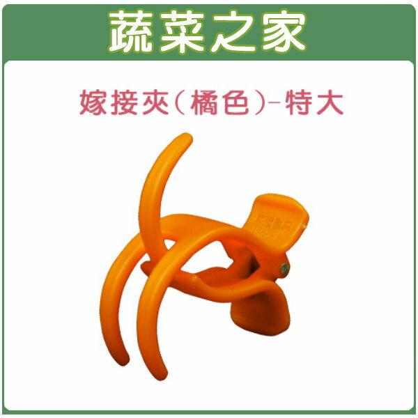 【蔬菜之家009-C65】橘色嫁接夾(蘭花夾.固定夾)-(特大)30入/組
