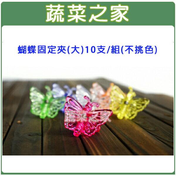 【蔬菜之家011-A32】蝴蝶固定夾(大)10支/組(不挑色)