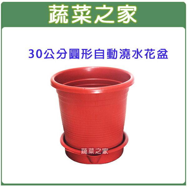 ~蔬菜之家005~AP30~30公分圓形自動澆水花盆^(含底盤^)
