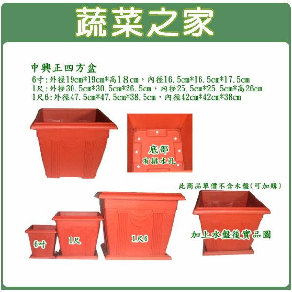 ~蔬菜之家005~D82~中興1尺正四方盆磚紅色