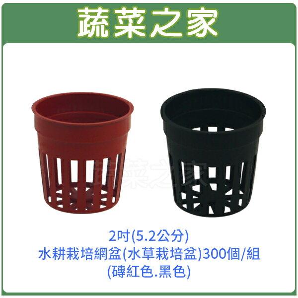 【蔬菜之家005-C90-2】2吋(5.2公分)水耕栽培網盆(水草栽培盆)300個/組