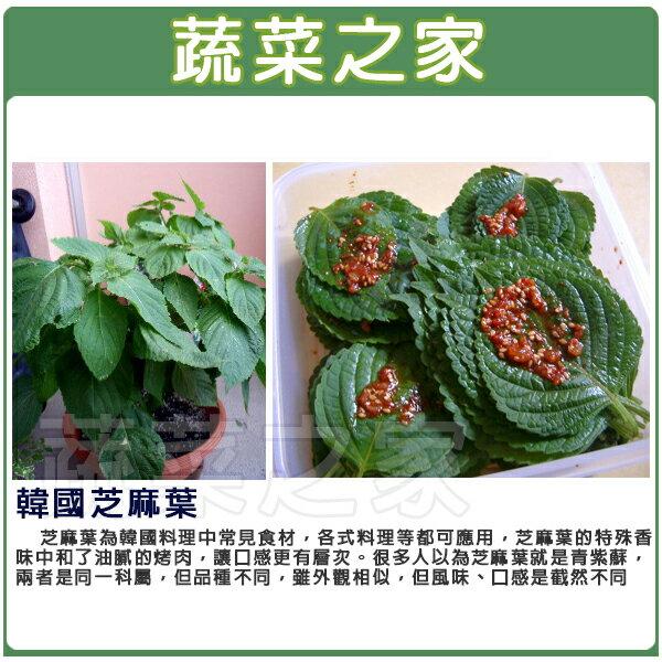 【蔬菜之家】A77.韓國芝麻葉(韓國烤肉用)種子35顆