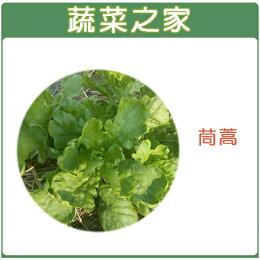 【蔬菜之家】A01.茼蒿種子 (圓葉種)5000顆
