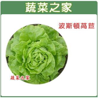 【蔬菜之家】A21.波斯頓萵苣種子 1500顆