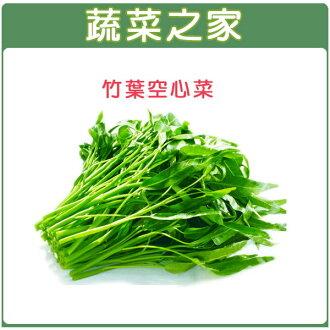 【蔬菜之家】A23.空心菜種子 (竹葉種蕹菜)500顆