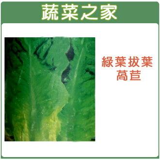 【蔬菜之家】A30.綠葉拔葉甜萵苣種子800顆(日本進口)