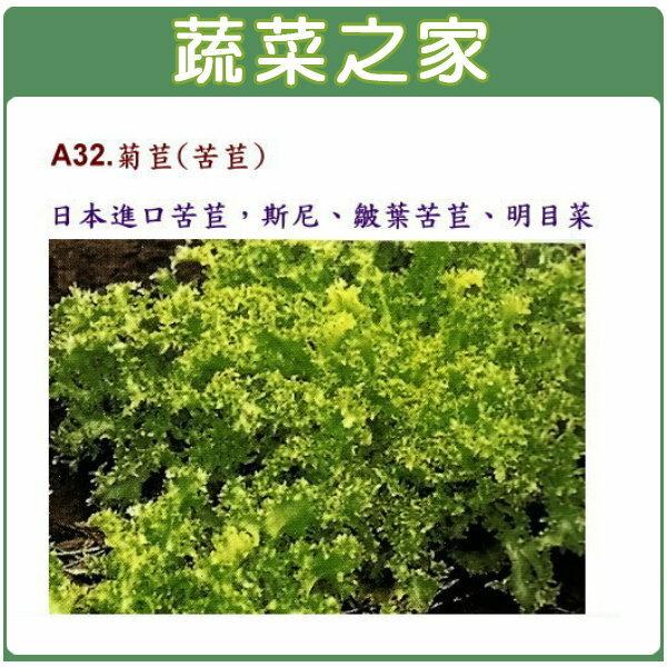 【蔬菜之家】A32.菊苣種子1000顆(日本進口苦苣)