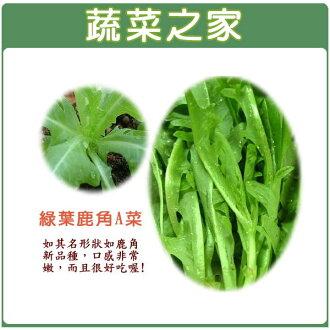 【蔬菜之家】A40.綠葉鹿角妹仔菜種子 2200顆 (日本進口新品種鹿角A菜)