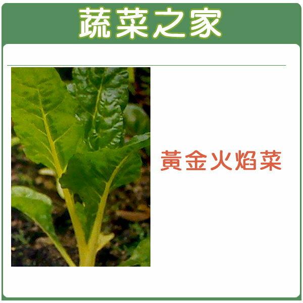 【蔬菜之家】A42.黃金火焰菜種子100顆 (黃金菾菜、君達菜、甜菜)