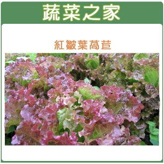 【蔬菜之家】A44.紅葉皺葉萵苣種子1500顆(廣東萵)