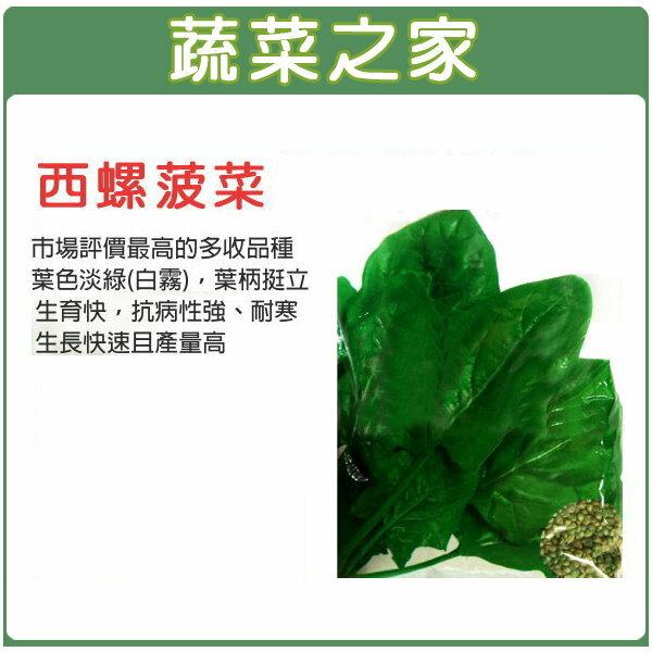 ~蔬菜之家~大包裝A58西螺菠菜種子120克