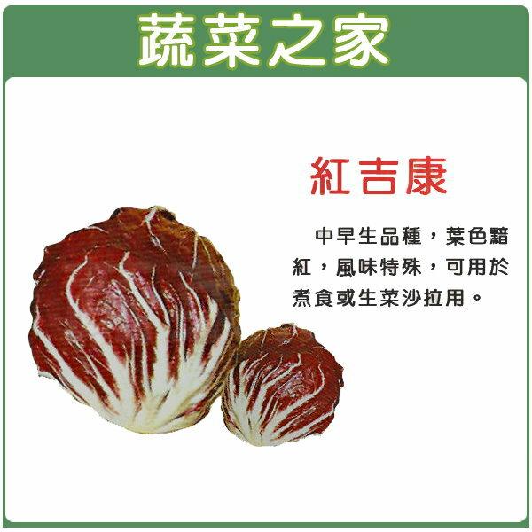 【蔬菜之家】A60紅吉康菜
