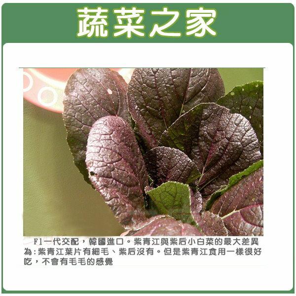 【蔬菜之家】大包裝A62.紫色青江菜種子5克(韓國進口)