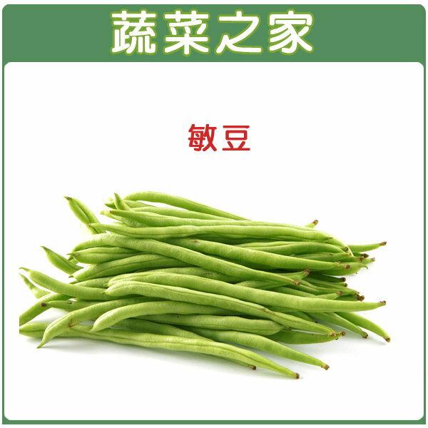 【蔬菜之家】E01.敏豆 (四季豆)種子100顆