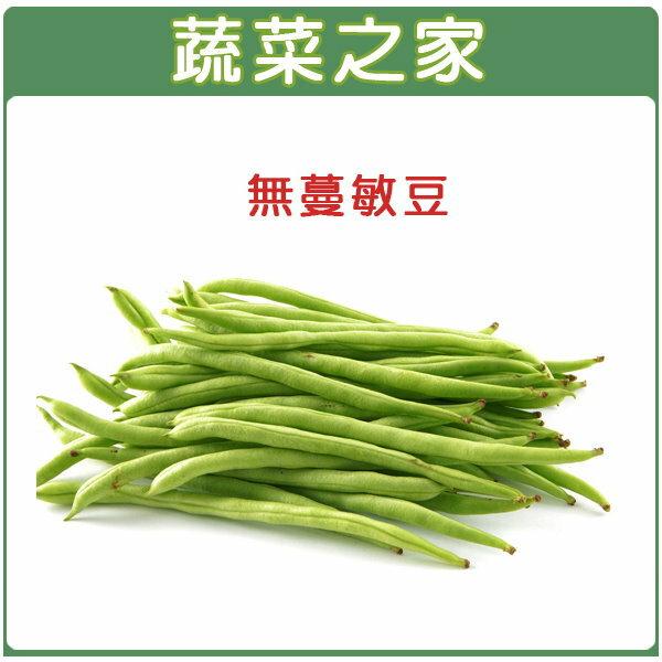 【蔬菜之家】E02.無蔓敏豆(無蔓矮腳品種)種子80顆