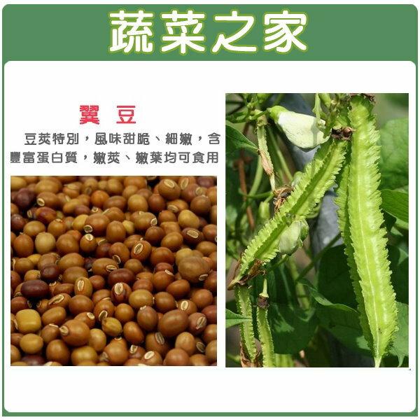 【蔬菜之家】E14.翼豆種子