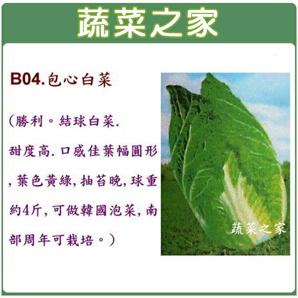 【蔬菜之家】B04.包心白菜種子100顆