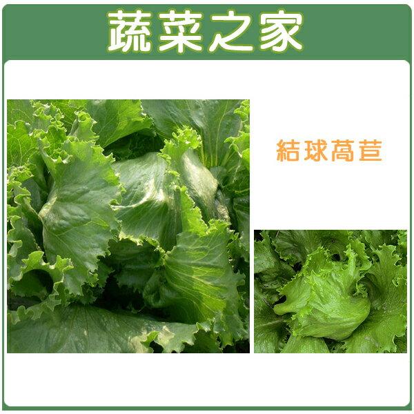 ~蔬菜之家~大包裝B05.結球萵苣種子40克