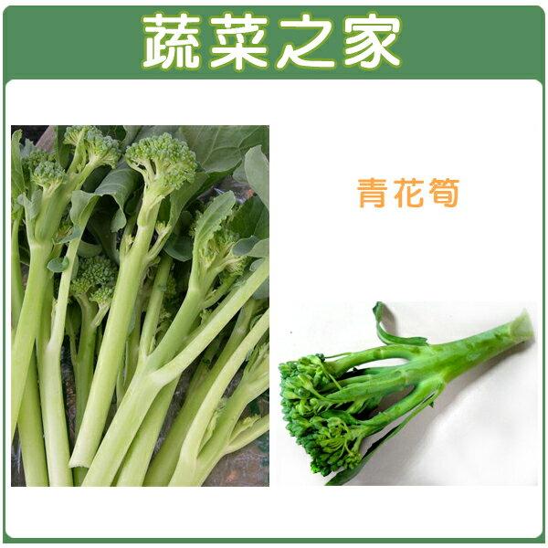 ~蔬菜之家~大包裝B07.青花筍種子1克^(約200顆^)