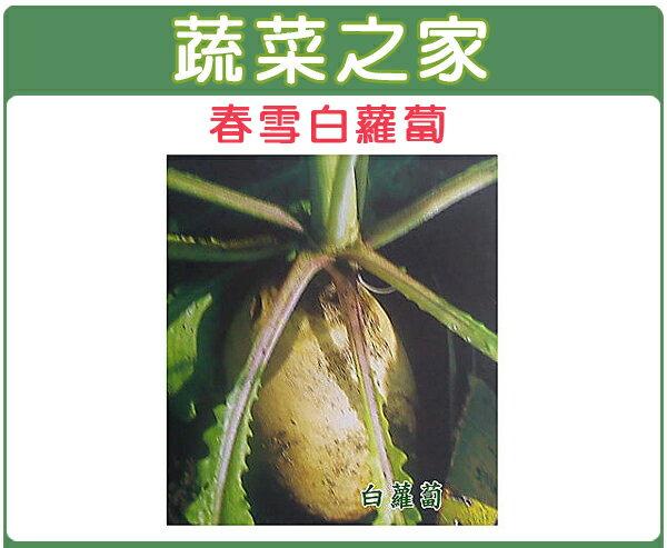 【蔬菜之家】C02.白蘿蔔 (春雪杆品種)種子1000顆