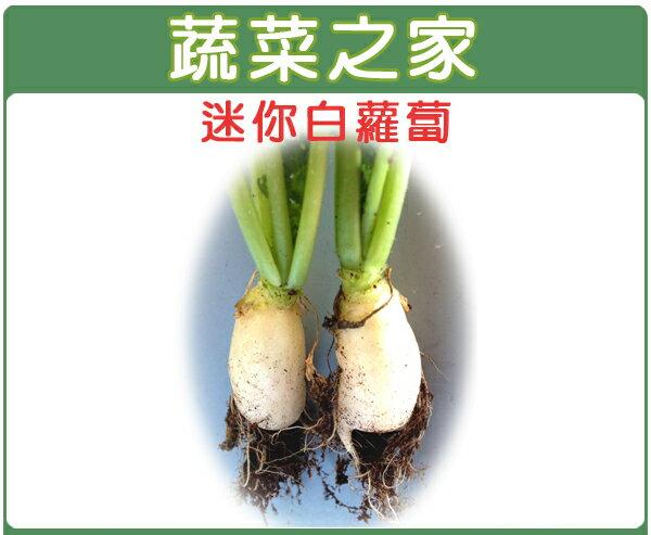 【蔬菜之家】C12.迷你白蘿蔔種子100顆
