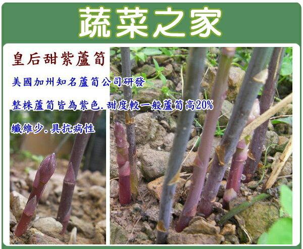 【蔬菜之家】C14.皇后甜紫蘆筍種子2顆